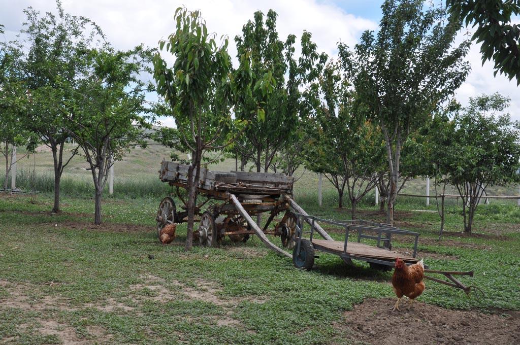 Çiftliğimizden Resimler